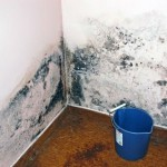 Плесень на стенах и обоях: избавление в 2 шага