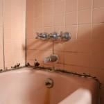 Удаление плесени и грибка в ванной комнате