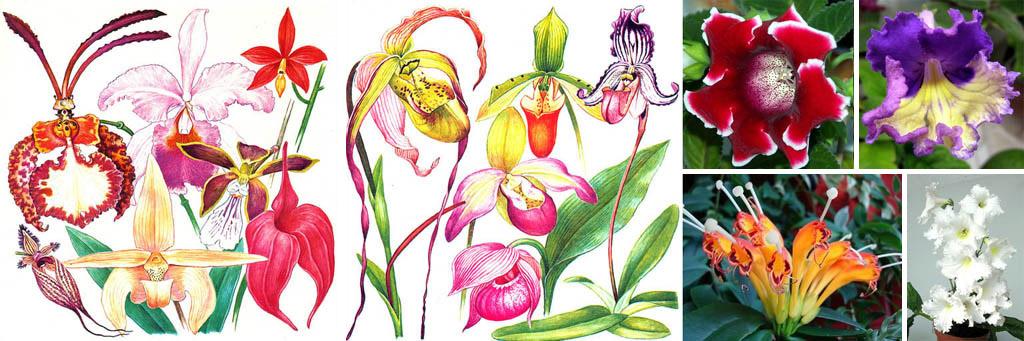 Цветы орхидных и геснериевых растений