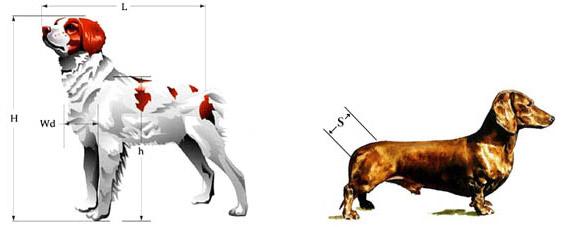 Обмерные параметры собак