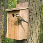 Cкворечник: из дерева и подручных материалов — для скворцов и мелких полезных птиц