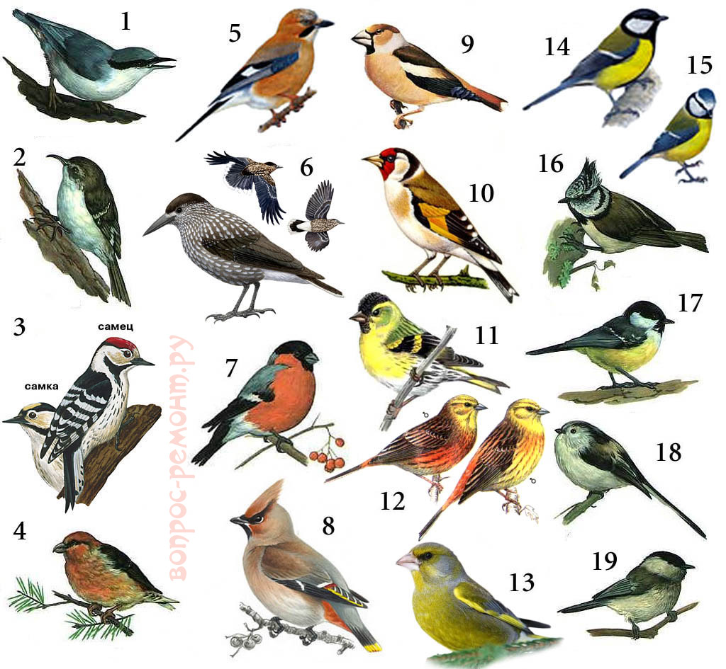 Птицы, которых можно ждать зимой на кормушке
