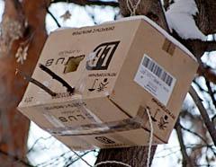 Зимовье-ловушка для сонь из коробки