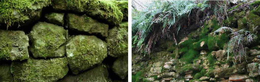 Замшелые стены с растительностью