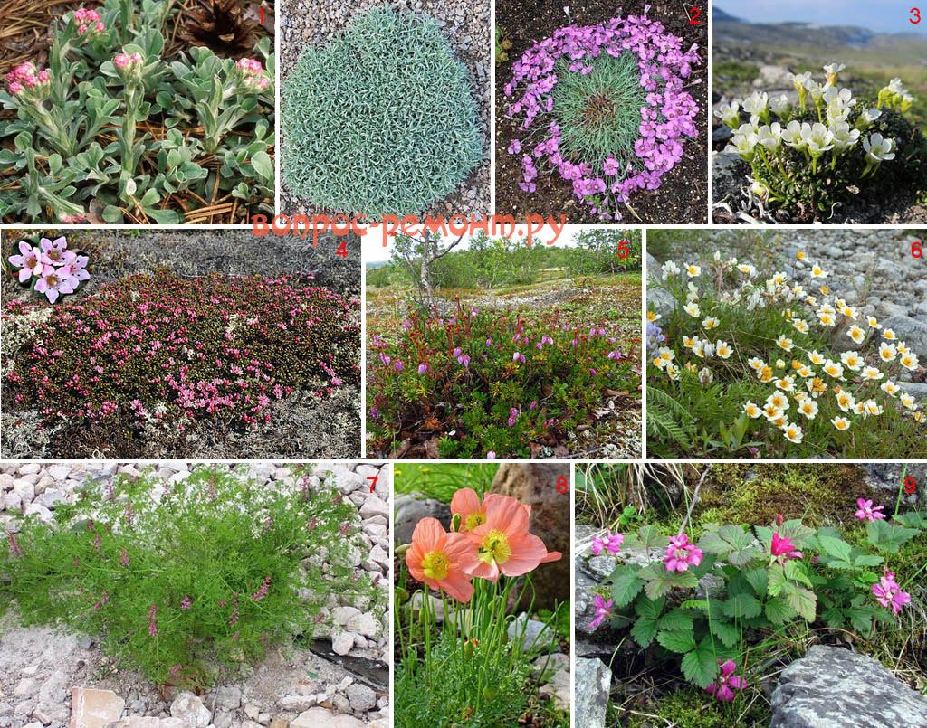Нетипичные покровные растения для альпийских горок