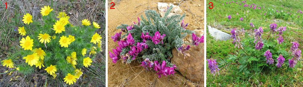 Отдельные растения для альпийских горок