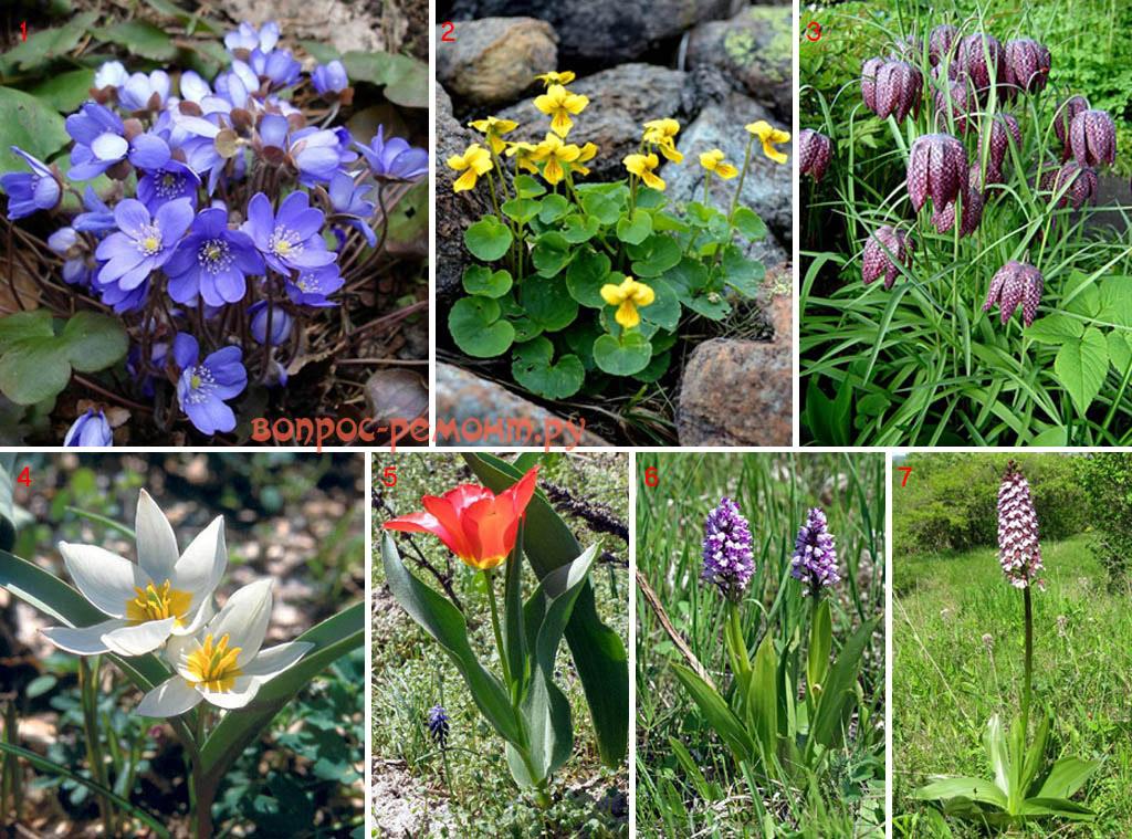 Одиночные растения для альпийской горки