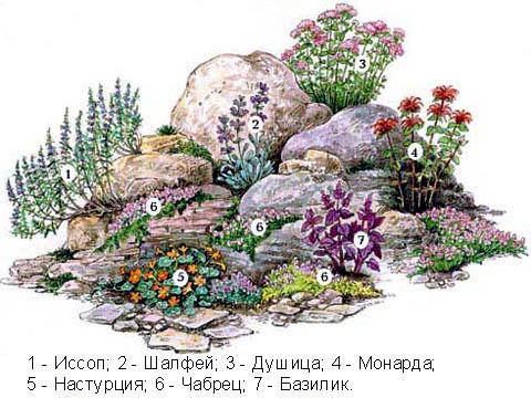 Пример озеленения мини-альпинария