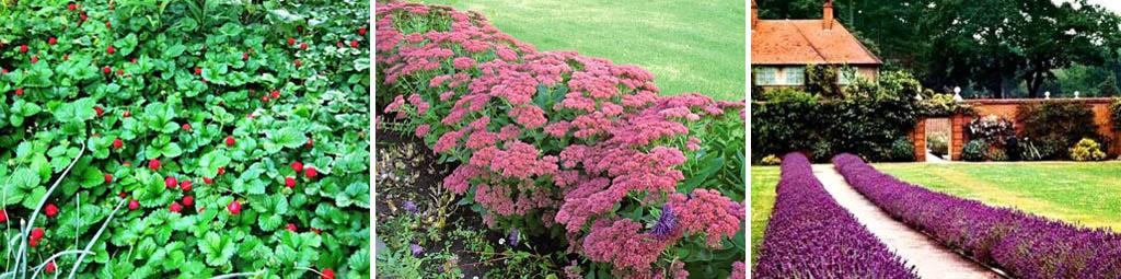 Неприхотливые бордюрные растения