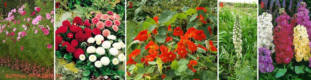 Красивые неприхотливые растения для клумб