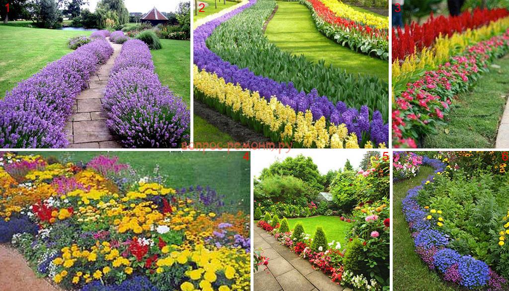 Виды цветочных бордюров
