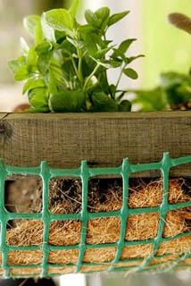 Растение, растущее подвешенным в сетке
