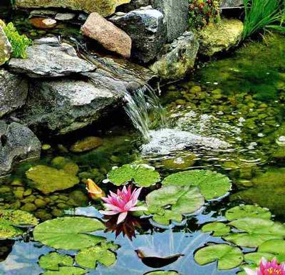 Водопад в пруду с нимфеями