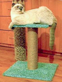Кот на лежанке