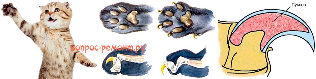 Устройство кошачьих когтей