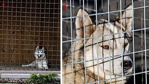 Вольеры для собак с решетками из сетки