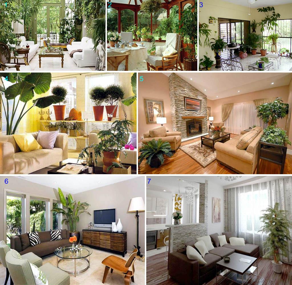 Создание уюта большими комнатными растениями