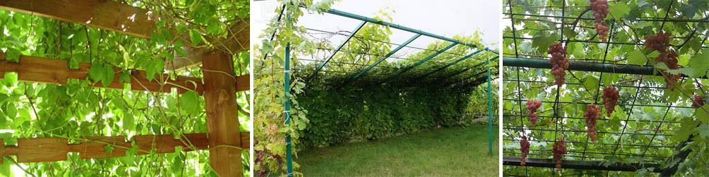 Как не надо (слева) и как правильно сделать перголу для винограда