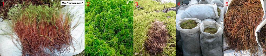 Как выбрать мох для конопатки