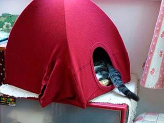 Кровать-домик для кошки из старой майки