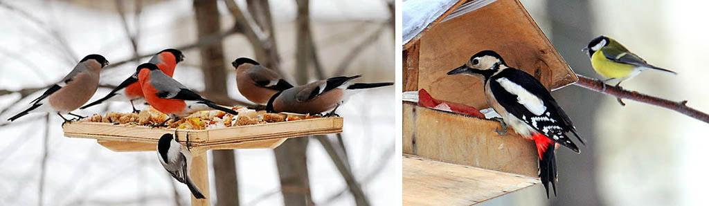 Дикие птицы зимой на кормушках