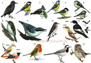 Птицы, заселяющие скворечники