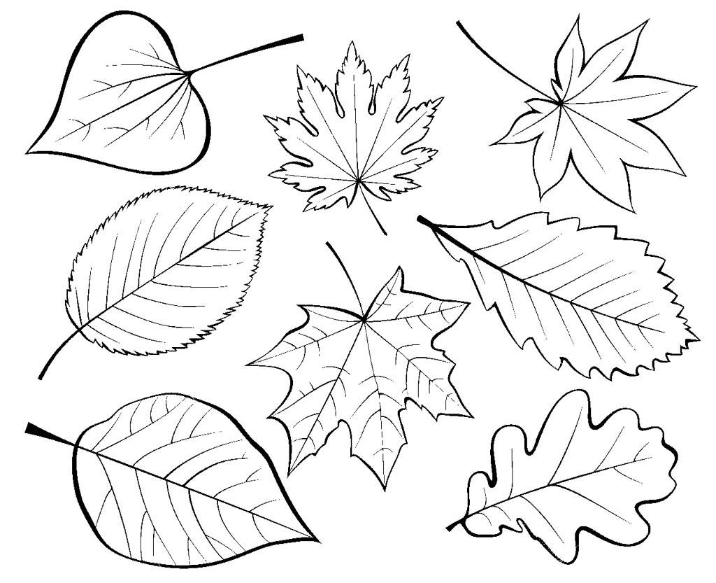 Шаблоны листьев для декорирования стен