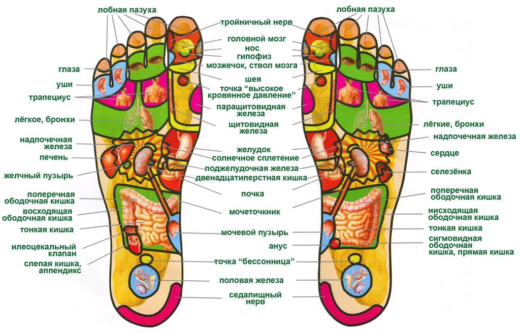 Расположение активных зон на ступнях ног человека