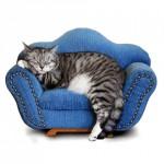 Лежак для кошки и кота: как изготовить или сшить, из старых вещей, из подручных материалов