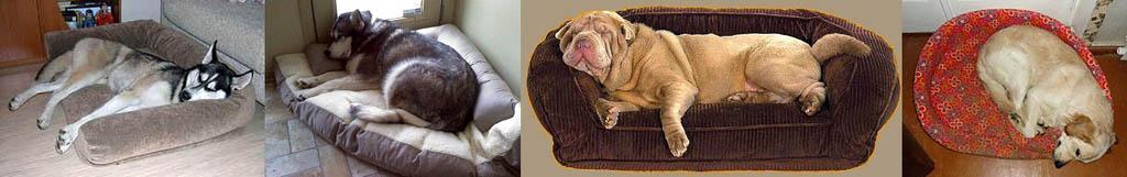 Как спят собаки