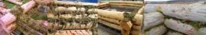 Как конопатить сруб болотным и лесным мхом