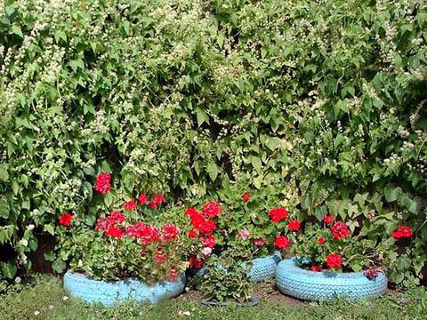 Клумбы из шин, вписанные в растительный ансамбль.
